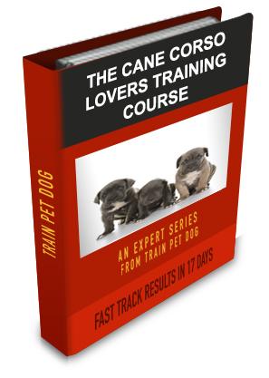 Cane Corso Training Tips For Cane Corso Dog Breeds