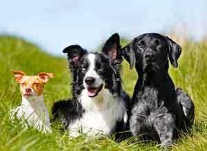 Dog with lovers